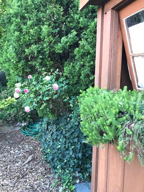 町の共同家庭菜園_d0269832_19310350.jpeg