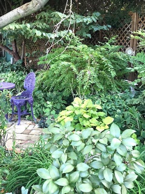 町の共同家庭菜園_d0269832_19312386.jpeg