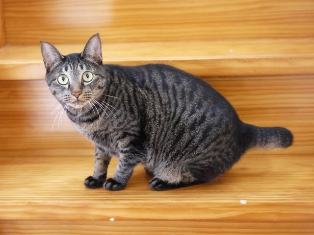 猫のお留守番 きとちゃん編。_a0143140_22045797.jpg