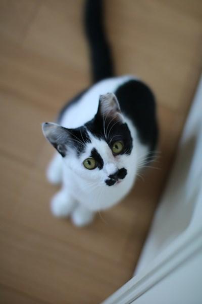 里親さま募集中の保護猫さん_e0151545_20595963.jpg