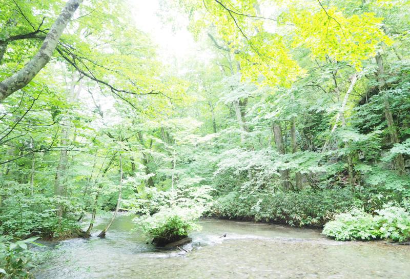 2019東北紀行 露出オーバーの奥入瀬_c0181552_17240547.jpg