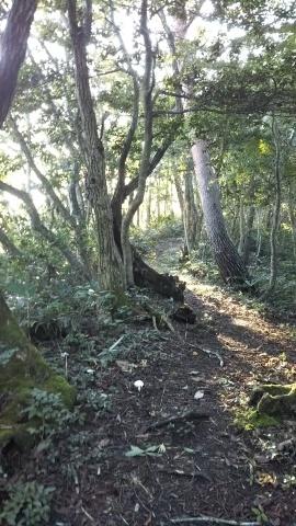 三郡山(806m、横田)_d0007657_11055781.jpg