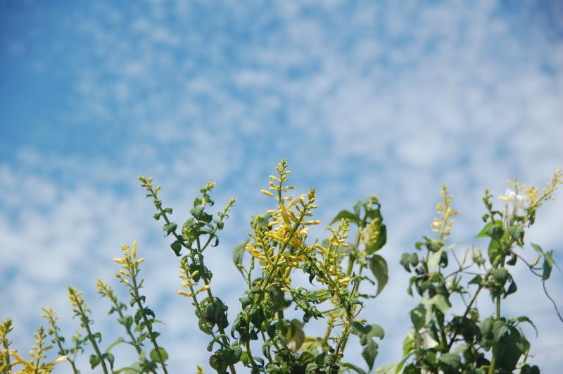 畑の小作業多々・・・我が家の農園_c0108460_16291216.jpg