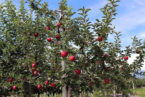 ひろさきりんご収穫祭2019_d0131668_17514764.jpg