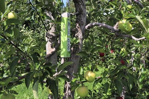 ひろさきりんご収穫祭2019_d0131668_17521586.jpg