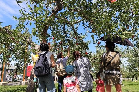 ひろさきりんご収穫祭2019_d0131668_17545589.jpg