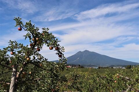 ひろさきりんご収穫祭2019_d0131668_17552566.jpg