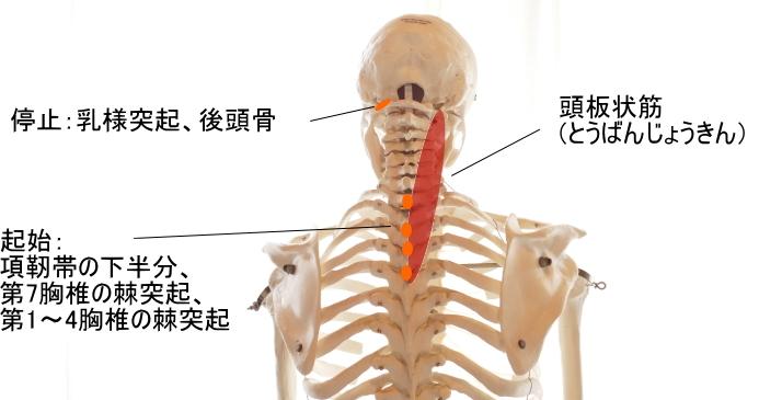 腰と首を据える_b0300988_17503381.jpg