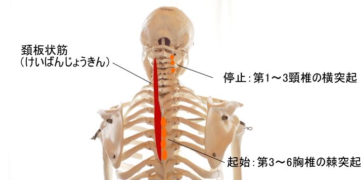 腰と首を据える_b0300988_17520269.jpg