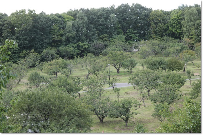 平岡公園('19・9・20)_f0146493_16513024.jpg
