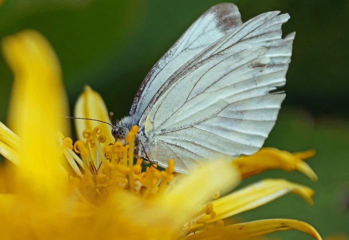 花と蝶_d0162994_08242860.jpg