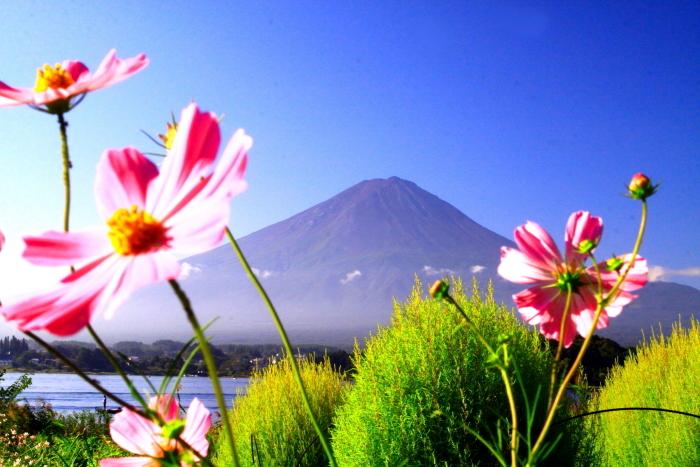 令和元年9月の富士(23)河口湖大石公園の富士_e0344396_16102681.jpg
