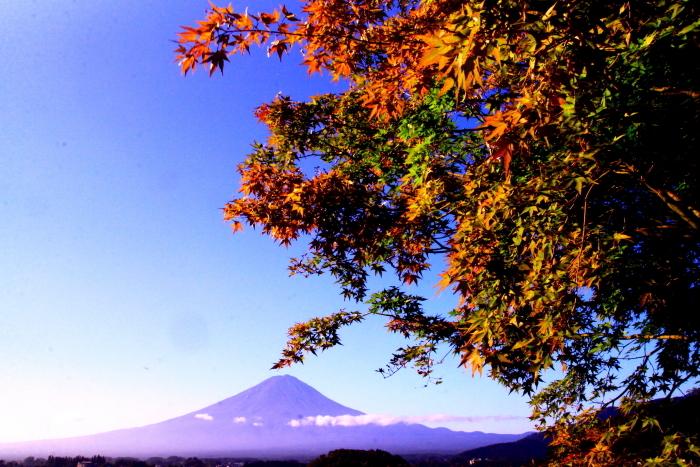 令和元年9月の富士(23)河口湖大石公園の富士_e0344396_16103523.jpg