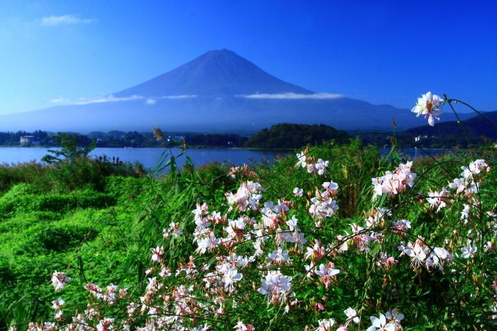 令和元年9月の富士(23)河口湖大石公園の富士_e0344396_16104332.jpg