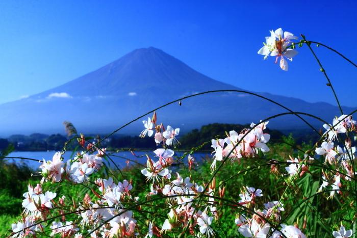 令和元年9月の富士(23)河口湖大石公園の富士_e0344396_16105252.jpg