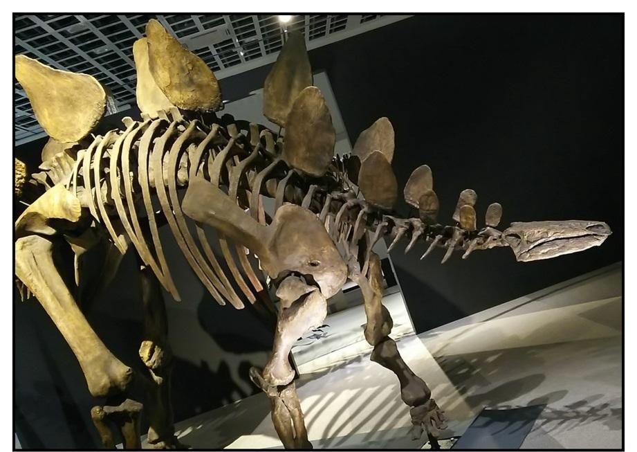 【漫画で雑記】青森大恐竜展2019は撮影可能!!_f0205396_14185725.jpg