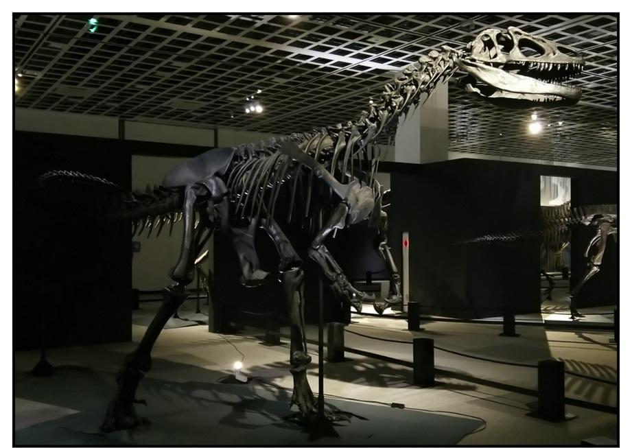 【漫画で雑記】青森大恐竜展2019は撮影可能!!_f0205396_14195142.jpg