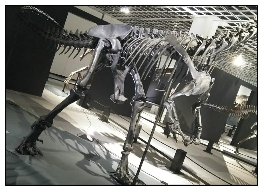 【漫画で雑記】青森大恐竜展2019は撮影可能!!_f0205396_14200775.jpg