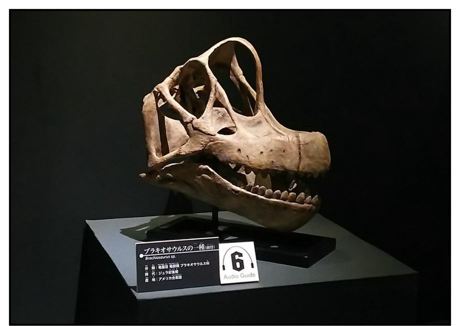 【漫画で雑記】青森大恐竜展2019は撮影可能!!_f0205396_14210262.jpg