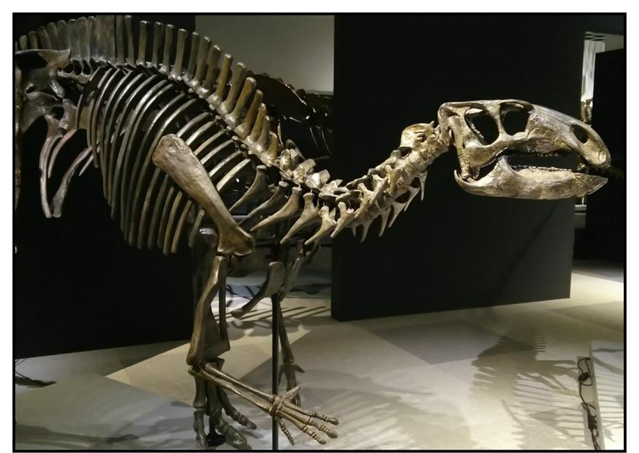 【漫画で雑記】青森大恐竜展2019は撮影可能!!_f0205396_14234808.jpg