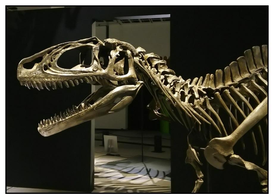 【漫画で雑記】青森大恐竜展2019は撮影可能!!_f0205396_14252297.jpg