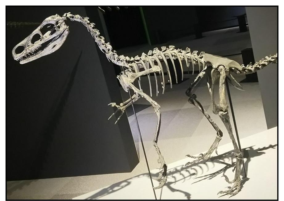【漫画で雑記】青森大恐竜展2019は撮影可能!!_f0205396_14263005.jpg