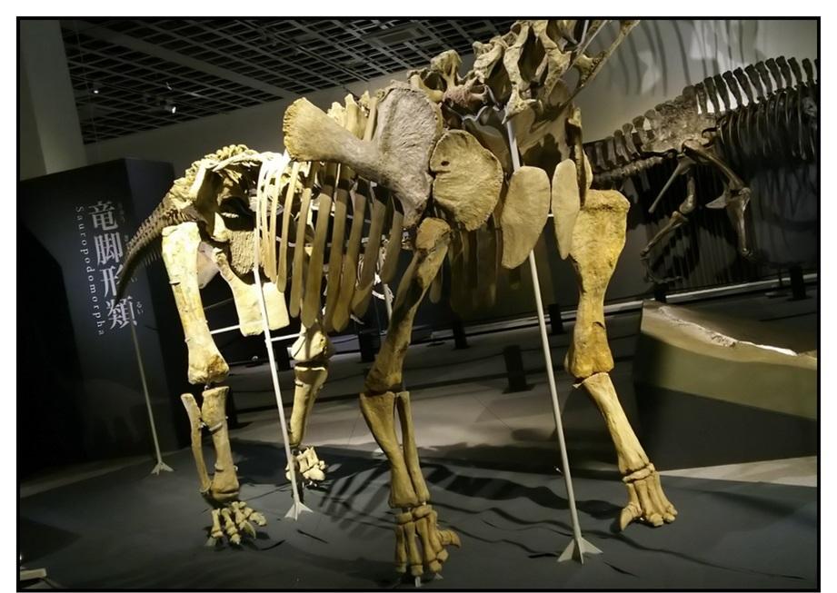 【漫画で雑記】青森大恐竜展2019は撮影可能!!_f0205396_14372223.jpg