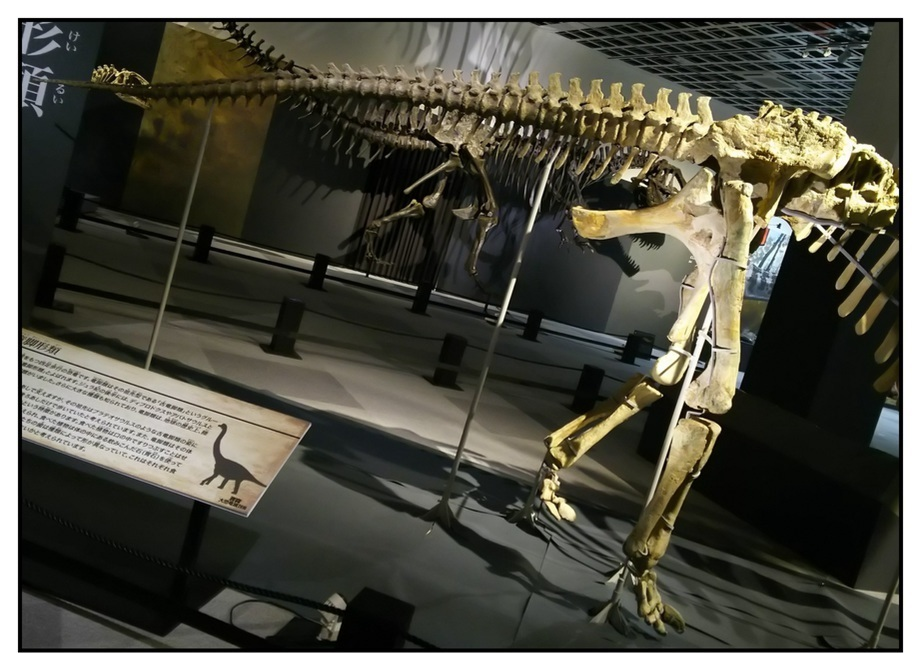 【漫画で雑記】青森大恐竜展2019は撮影可能!!_f0205396_14372854.jpg