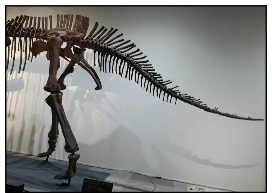 【漫画で雑記】青森大恐竜展2019は撮影可能!!_f0205396_14423101.jpg