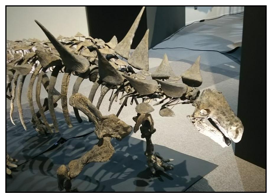 【漫画で雑記】青森大恐竜展2019は撮影可能!!_f0205396_14440962.jpg