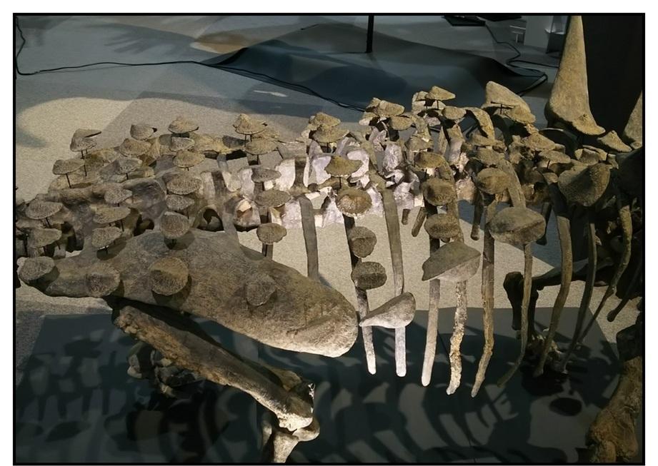 【漫画で雑記】青森大恐竜展2019は撮影可能!!_f0205396_14441435.jpg