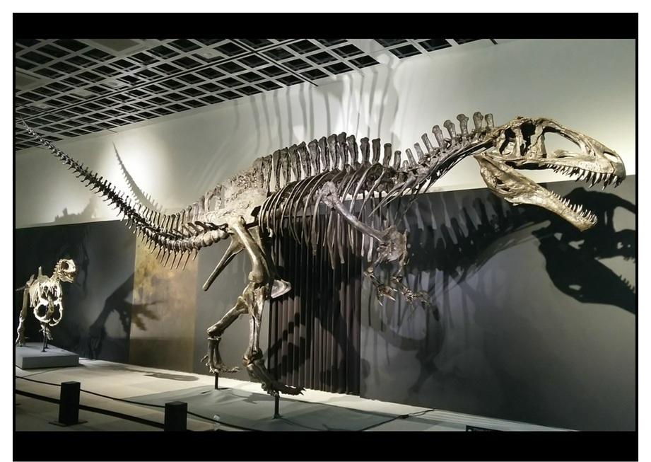 【漫画で雑記】青森大恐竜展2019は撮影可能!!_f0205396_14495413.jpg