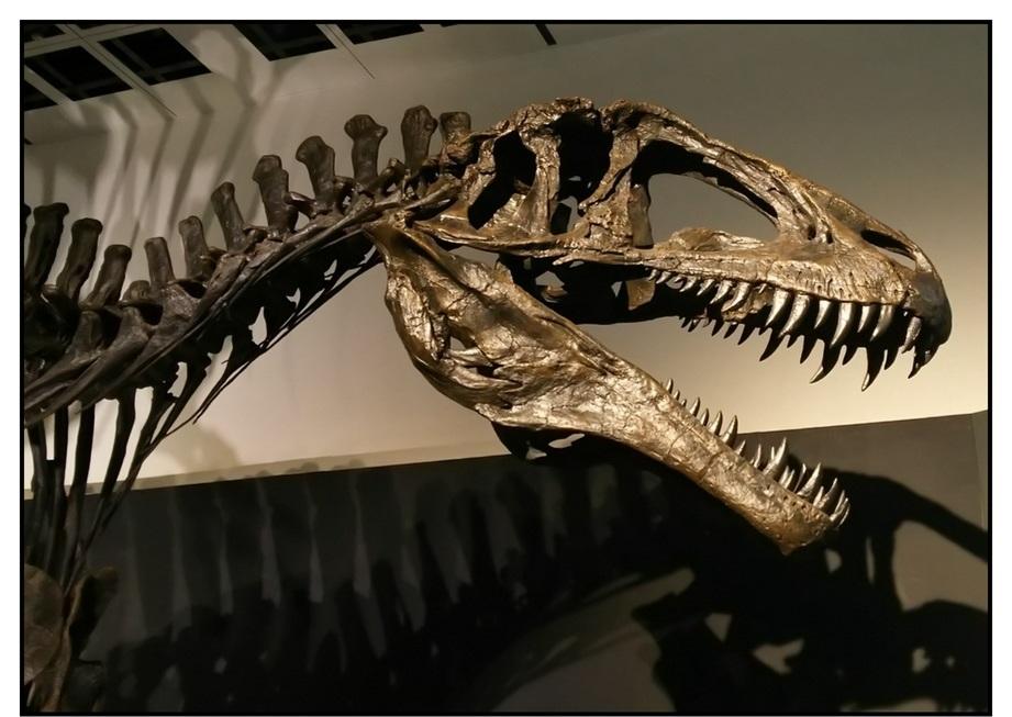 【漫画で雑記】青森大恐竜展2019は撮影可能!!_f0205396_14495857.jpg