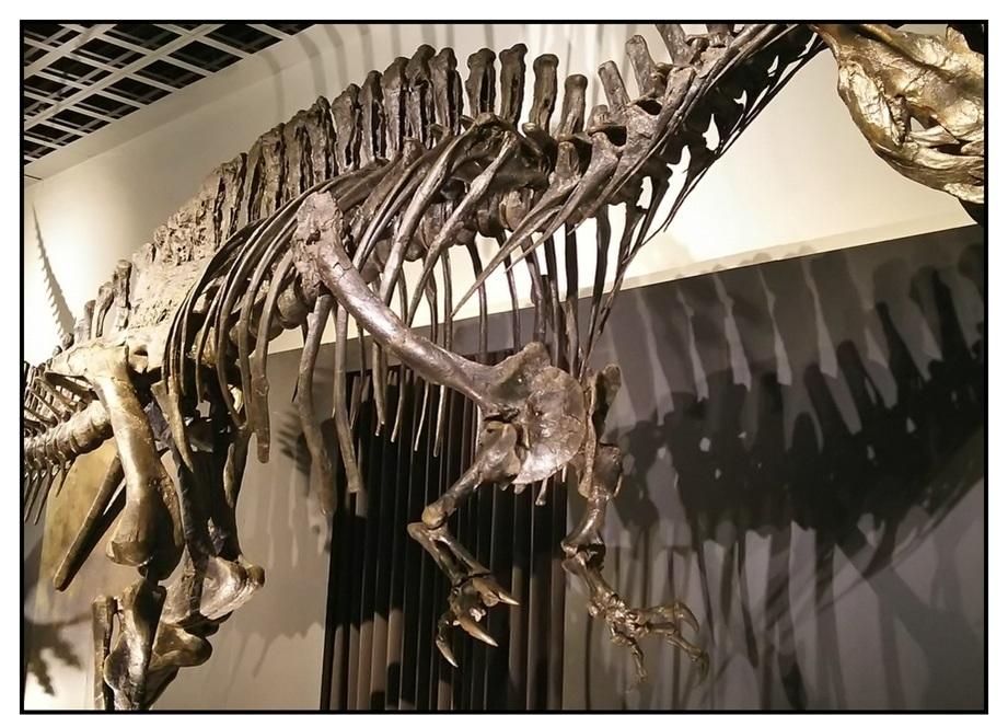 【漫画で雑記】青森大恐竜展2019は撮影可能!!_f0205396_14500526.jpg
