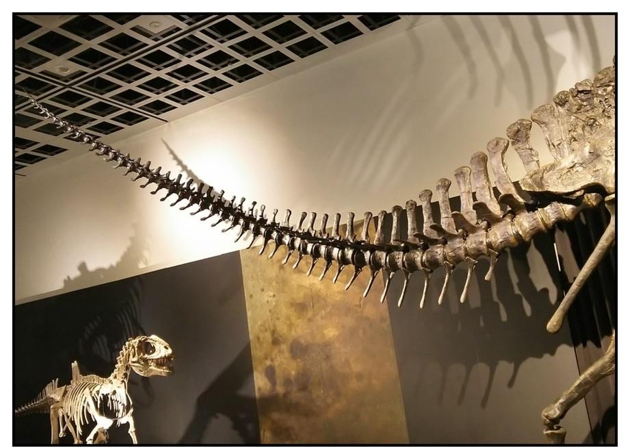 【漫画で雑記】青森大恐竜展2019は撮影可能!!_f0205396_14501868.jpg