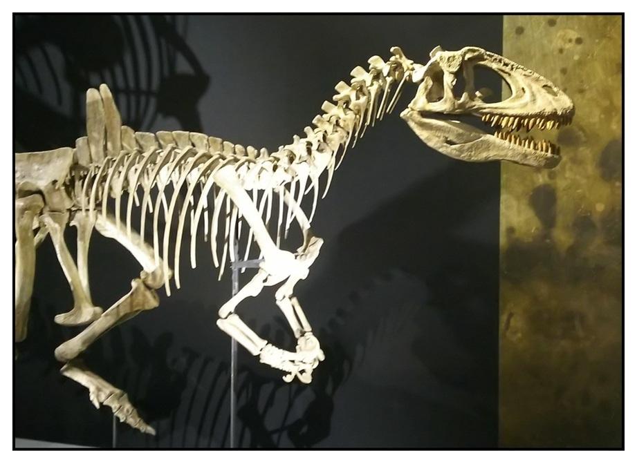 【漫画で雑記】青森大恐竜展2019は撮影可能!!_f0205396_14520549.jpg