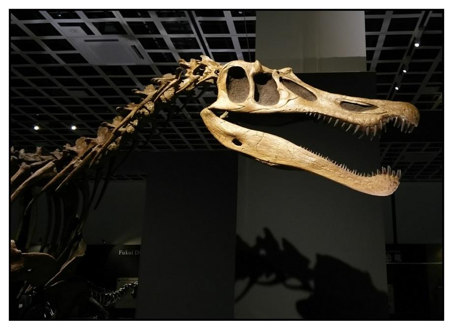【漫画で雑記】青森大恐竜展2019は撮影可能!!_f0205396_14530326.jpg
