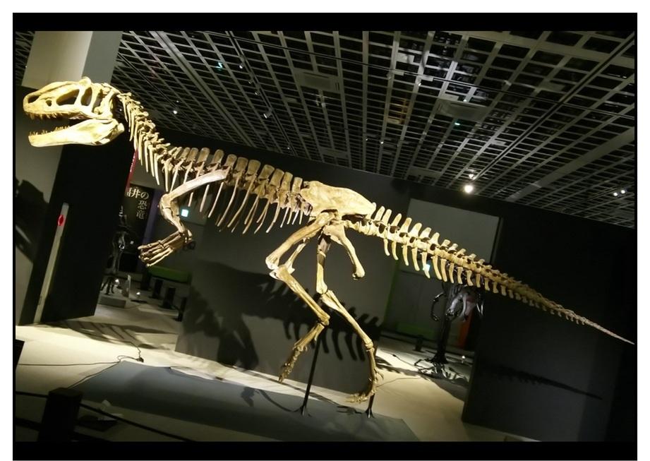 【漫画で雑記】青森大恐竜展2019は撮影可能!!_f0205396_14543180.jpg