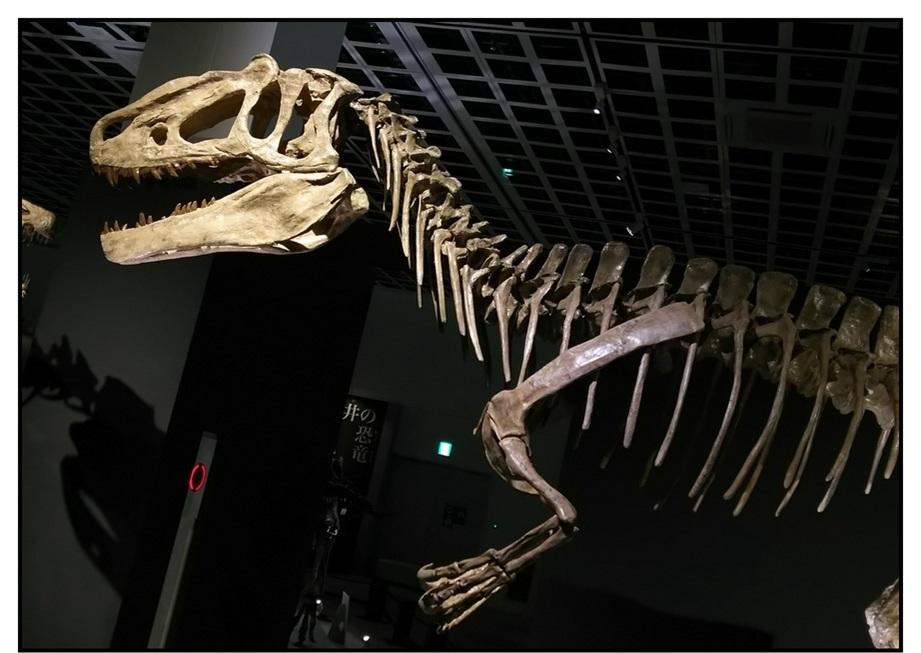 【漫画で雑記】青森大恐竜展2019は撮影可能!!_f0205396_14543754.jpg