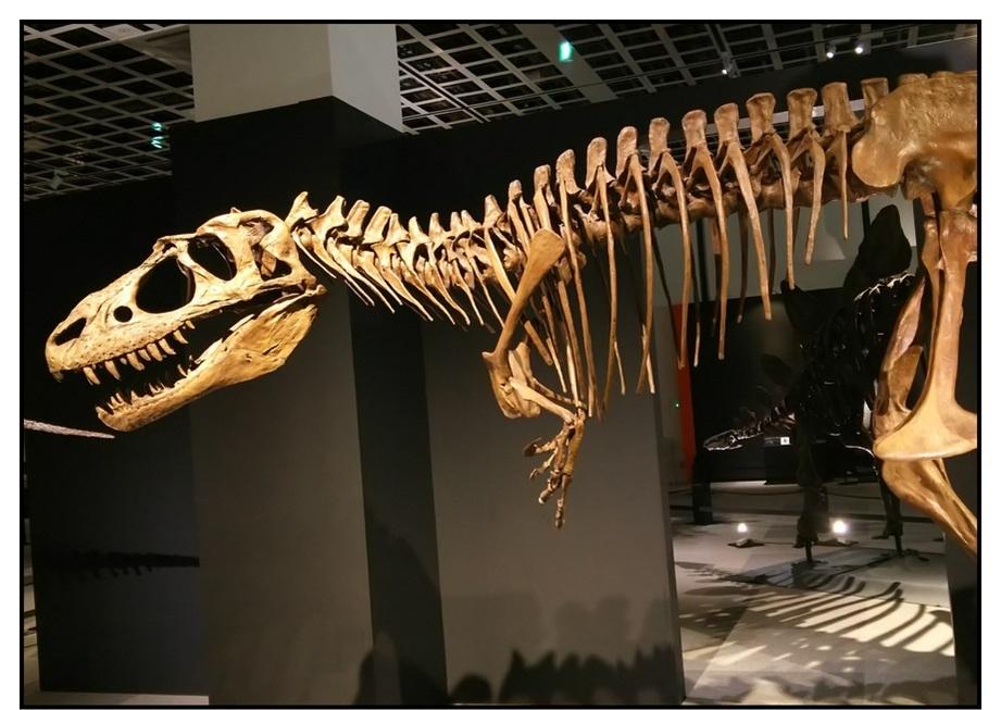 【漫画で雑記】青森大恐竜展2019は撮影可能!!_f0205396_14562542.jpg