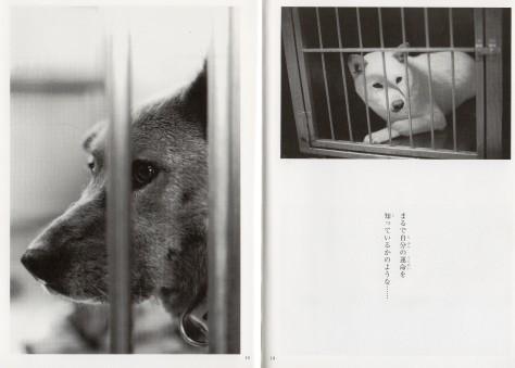 県議会での知事への質問④=犬・猫殺処分ゼロに向けた取り組み_d0050503_01144804.jpg