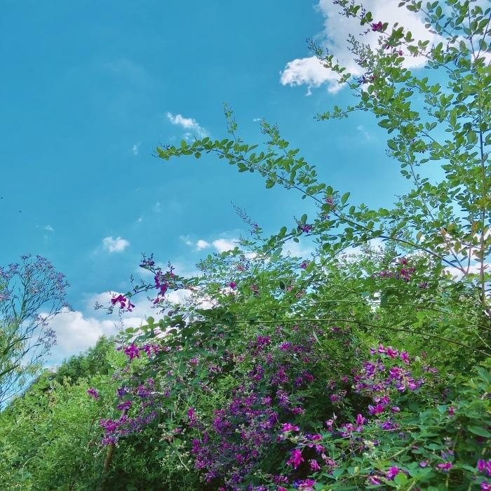 曳舟〜向島百花園〜隅田川_d0138811_08563387.jpeg