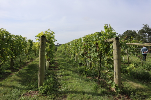 イギリスの旅3日目 ガーデンツアー 2日目 Wyken Vineyardsその1_e0194723_21114402.jpg