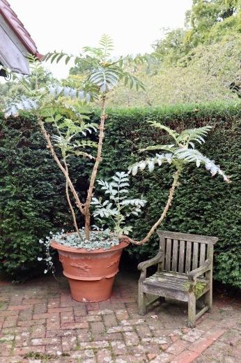 イギリスの旅3日目 ガーデンツアー 2日目 Wyken Vineyardsその1_e0194723_22161400.jpeg