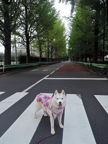 散歩屋日誌【お泊り保育編 4】_c0062832_12340626.jpg