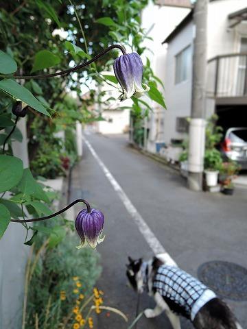散歩屋日誌【お泊り保育編 4】_c0062832_12340668.jpg