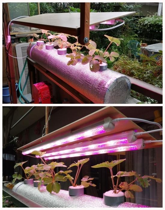 植物育成ライト_c0063348_08330270.jpg