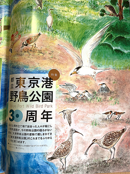 「野鳥」9.10月合併号、イラストご掲載_e0026053_14323870.jpg