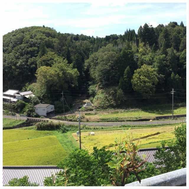 稲刈りの季節_b0328361_17465376.jpeg