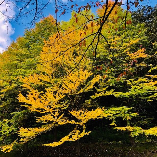 BROミーティング北海道開催地は滝野すずらん公園に決定!_d0197762_12195197.jpg